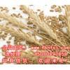 ※宏发现款收购※大量玉米玉米皮麸皮豆粕棉粕等