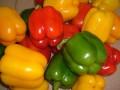 甜椒 菜椒种植技术 (133播放)