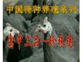 珍珠鸡养殖技术视频介绍 (49播放)