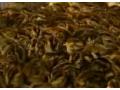 鹌鹑养殖技术视频介绍 (61播放)
