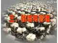 黑木耳的种植技术视频 (179播放)