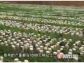 黑木耳栽培技术的视频介绍 (102播放)