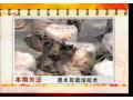 木屑生出的黑珍珠 黑木耳栽培技术 (71播放)