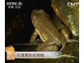 石缝里的生财蛙-2013年8月19日[每日农经] (20播放)