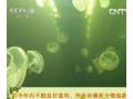 水精灵成就创业梦-2013年8月20日[生财有道] (84播放)