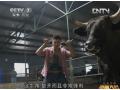 山东高青黑牛财富大会-20131007致富经 (70播放)