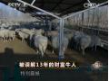 内蒙古五原县赵焕军养羊3万多头 (2265播放)
