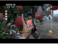 农产品电商崛起 第二集 产品的故事-【致富经】赢在未来 (416播放)