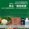 最新超敏蛋白农