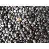 供应核桃种子、杜梨种子、文冠种子、花椒种子、油松种子