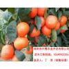 阿坝核桃树苗种植技术,阿坝核桃树苗出售, 阿坝核桃树苗产量