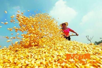 2017玉米价格