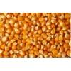 大量收购玉米、菜粕、次粉13907229401