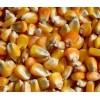 水产养殖合作社收购玉米大豆高粱碎米等
