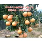 福建省平和县正达蜜柚种苗有限公司