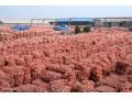 大蒜价格昂首挺进!大蒜市场需求回暖 蒜农要把握好卖蒜的时机