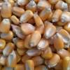饲料厂求购菜饼 玉米 高粱 麸皮 棉粕 大豆 次粉等原料