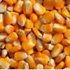 长期收购:玉米小麦次粉麸皮高粱DDGS等各种饲料原料