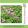 紫云英花粉98% 新资源原料