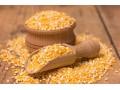玉米价格将迎来上涨行情,能涨到1元/斤吗?农民卖玉米好时机!