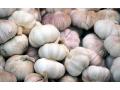 大蒜市场货源紧俏,大蒜价格温和上涨!市场交易平稳,蒜价看涨!