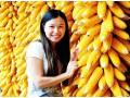 玉米市场热火朝天,玉米价格强势运行!农民有玉米就卖后市调整!