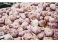 大蒜市场货源增多,大蒜价格下移!成交量一般,蒜价压力加大!
