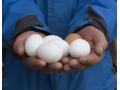鸡蛋价格全线上涨,快吃不起鸡蛋了,蛋价大涨有望破5!