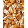 玉米目前收购价 养殖场大量求购玉米高粱碎米棉粕荞麦油糠大豆