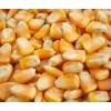 长期求购玉米高粱黄豆荞麦等农副产品