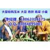 今日玉米价格一斤多少钱|垄上收购小麦大豆(实力厂家)