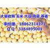 今年玉米收购价格|高价收购玉米小麦(优质厂家)