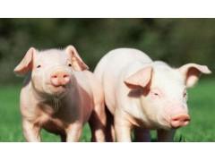 生猪价格到底涨不涨?6月猪价是转折点!猪价久跌不止为何?