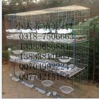 养鸡笼养鸽笼养兔笼狐狸笼鹧鸪笼鹌鹑笼鸽子笼兔子笼运输笼宠物笼