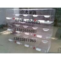 鸡笼子鸽笼子兔笼子鹌鹑笼狐狸笼貉子笼兔子笼鸽子笼肉鸽笼宠物笼