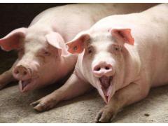 生猪价格局部跌破5元关口,持续低迷震荡为主,猪价格抗跌有限!