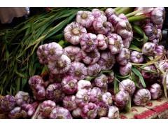 大蒜价格稳中略弱,大蒜市场采购商不多,蒜价格低迷,交易清淡!