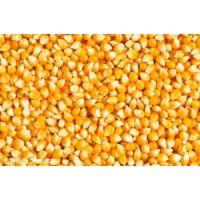 玉米收购企业;汉江畜禽养殖收购玉米数量不限现金结算
