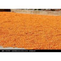 汉江养殖企业长期求购玉米高粱黄豆荞麦等农副产品