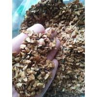 香椿种子,芽苗菜种子