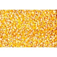 企业大批量采购玉米、大豆、大米、高粱、小麦等饲料原料