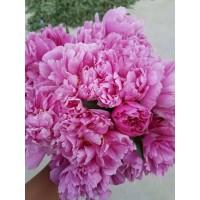 芍药鲜切花、母亲节切花芍药、鲜花芍药价格