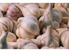 大蒜价格基本稳定 市场成交量放大 蒜价坚挺 大蒜价格有上涨趋势