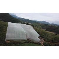 工厂批发新料果树防虫网宽幅加厚好网直发用户质优价廉