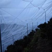 抗老化果树防虫网质量好新料加厚防虫网工厂直发质优价廉