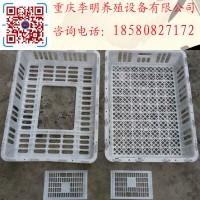 鸡用运输笼 成鸡周转笼 塑料鸡笼 养殖运输笼