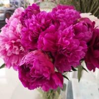 母亲节鲜花芍药花束、芍药鲜切花